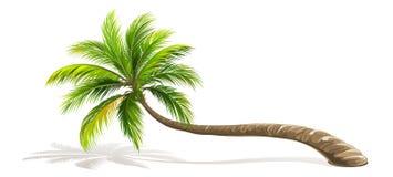 Изолированная пальма вектор Стоковые Изображения