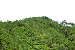 Изолированная подсказка холма горы Стоковое фото RF