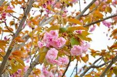 изолированная предпосылкой белизна вала весны Стоковые Изображения