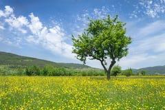 изолированная предпосылкой белизна вала весны Стоковые Фотографии RF