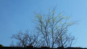 изолированная предпосылкой белизна вала весны Стоковое Изображение