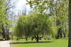 изолированная предпосылкой белизна вала весны Стоковая Фотография