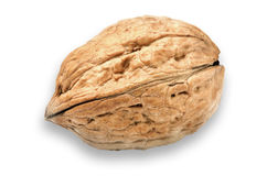 изолированная предпосылкой белизна грецкого ореха С sp отражения и экземпляра Стоковое Фото