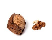 изолированная предпосылкой белизна грецкого ореха Стоковая Фотография