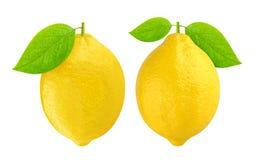 изолированная предпосылкой белизна лимона Стоковые Изображения
