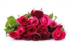 изолированная предпосылкой белизна розы красного цвета Стоковые Фотографии RF