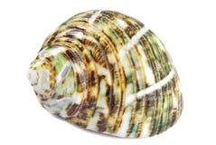 Изолированная раковина Seashell стоковое изображение
