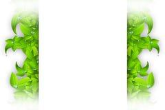 Изолированная рамка листьев Стоковые Изображения RF