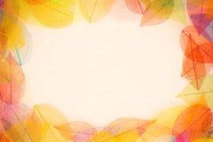 изолированная рамка осени красивейшая выходит реальная белизна Стоковая Фотография