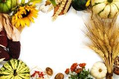 изолированная рамка осени красивейшая выходит реальная белизна Стоковые Фото