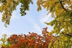 изолированная рамка осени красивейшая выходит реальная белизна Стоковая Фотография RF