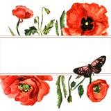 Изолированная рамка цветка мака Wildflower в стиле акварели Стоковое Изображение