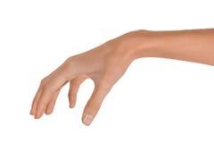 Изолированная рука пустой открытой женщины женская в положении на белой предпосылке Стоковые Изображения RF