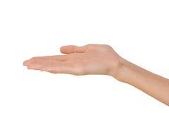 Изолированная рука пустой открытой женщины женская в положении на белой предпосылке Стоковая Фотография