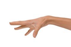 Изолированная рука пустой открытой женщины женская в положении на белой предпосылке Стоковые Изображения