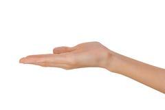 Изолированная рука пустой открытой женщины женская в положении на белой предпосылке Стоковые Фото