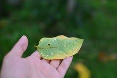 изолированная рукой белизна листьев Стоковое Изображение RF