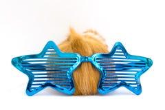Изолированная свинья Guiena - Стоковое Изображение RF