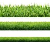 Изолированная трава Стоковое Фото