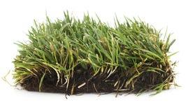 изолированная трава стоковые изображения