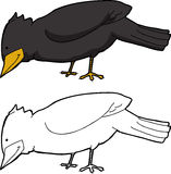 Изолированная черная птица Стоковые Фотографии RF