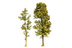 2 изолированного дерева Стоковое Изображение