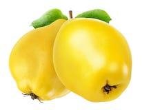 2 изолированного плодоовощ айвы Стоковая Фотография RF