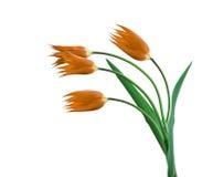 4 изолированного тюльпана Стоковая Фотография RF