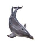 Изолированное взгляд сверху дельфина Стоковое Изображение