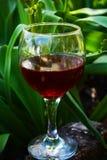 изолированное вино waite om красное Стоковое фото RF