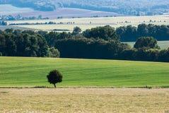 Изолированное дерево в земле Стоковые Изображения