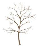 Изолированное дерево на белой предпосылке Стоковые Изображения RF