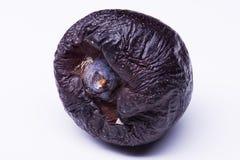 Изолированное избалованное толстенькое Стоковое Фото