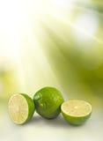 Изолированное изображение зрелых зеленых лимонов Стоковые Изображения