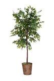 Изолированное поддельное дерево Стоковые Изображения RF