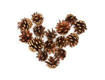 Изолированное сердце конусов сосны Стоковое Изображение