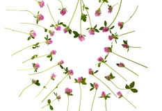 Изолированное сердце клевера Стоковое Фото