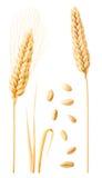 Изолированное собрание пшеницы Стоковое Изображение
