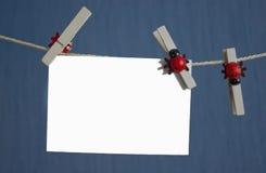 Изолированные белизной зажимки для белья фото фиксированные на веревочке Стоковое Фото