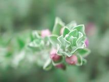 изолированные валы дуба клена липы листьев белые Стоковые Изображения