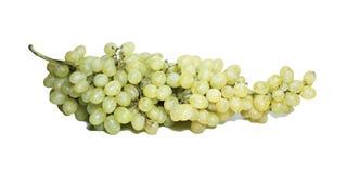 изолированные виноградины пука Стоковые Изображения RF