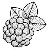 Изолированные винтажные виноградины иллюстрация вектора