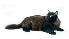 изолированные глаза кота смотрят лежа белизну круглой съемки удивленную студией Стоковая Фотография