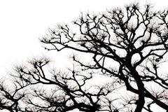 Изолированные дерево и ветвь в черно-белом иллюстрация штока