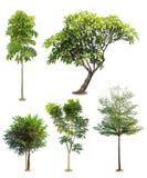 Изолированные деревья Стоковое Изображение