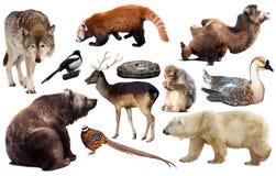 Изолированные животные Азии Стоковое фото RF