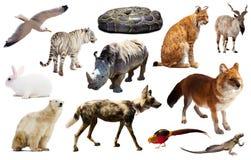 Изолированные животные Азии Стоковая Фотография