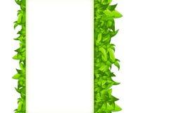 Изолированные листья на белизне Стоковая Фотография
