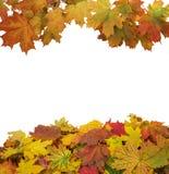 Изолированные листья осени на белизне Стоковая Фотография RF
