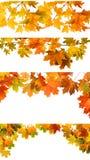 Изолированные листья осени Стоковое Фото